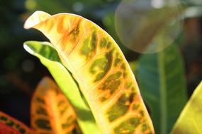 热带景观植物叶子