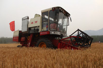 收割机在收割小麦