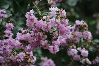 粉色鲜花背景虚化特写