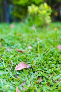 公园草地的落叶