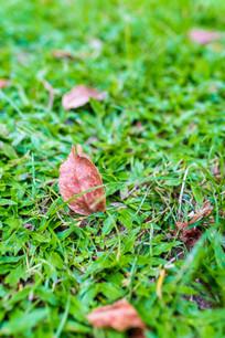 公园草坪的落叶