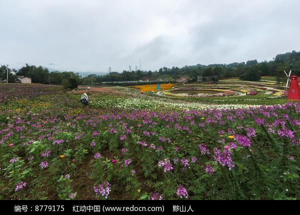 黟县叶村石林花卉图片