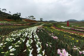 黟县叶村香水百合种植园
