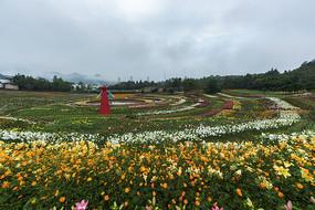 叶村香水百合种植园