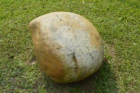 草坪上的一块石头