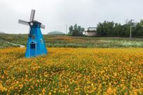 黄色菊花与风车