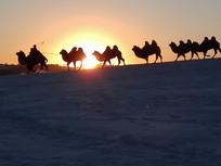 金色夕阳中的骆驼队