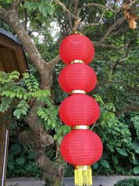 树上的灯笼