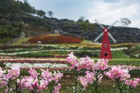 西递叶村香水百合花园