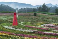 种植的香水百合园