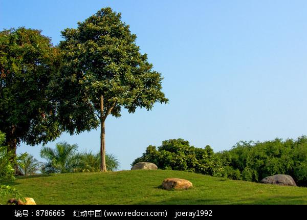 草地小树图片