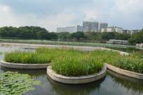 广州流花湖公园草丛