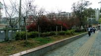 清镇城市绿化