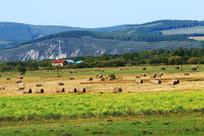 林间牧场草捆风景