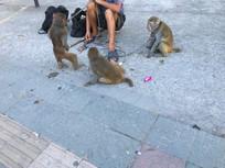 被贩子拴着的猴子
