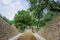 千山大安寺石阶与树木