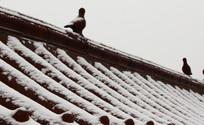 农村琉璃瓦建筑被雪花覆盖景象