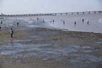 海滩捡贝壳