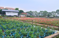 花卉盆栽田园风景