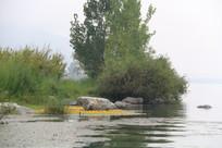 湖边茂密的草丛与翠绿的大树