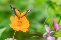 蝴蝶在小憩