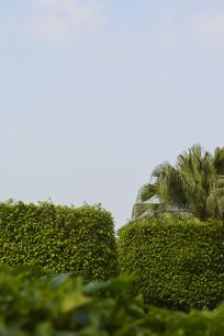 蓝天 绿植