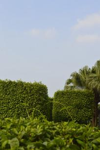蓝天下的绿植