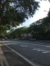 长满绿植的公路