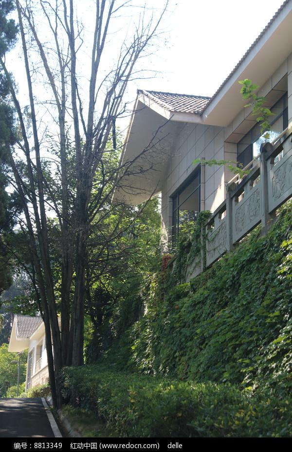 林间山坡上的白色别墅图片