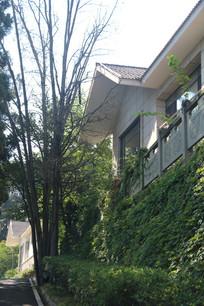 林间山坡上的白色别墅