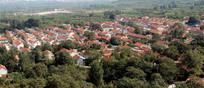 绿树掩映的山东北方农村住房