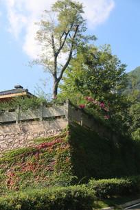 围墙上茂密的植物与蓝天