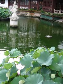 滨湖上的荷花与仙女雕塑