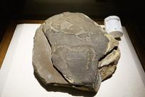 贺兰山岩画:马、符号