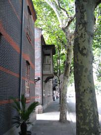 青砖墙与梧桐树