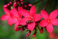 红花上的小虫子