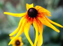 漂亮的接近凋零的花朵