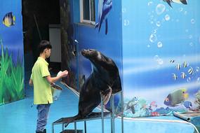 海狮接受投喂