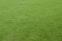 草坪草地素材图