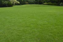 草坪青草地