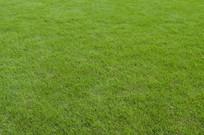 草坪实拍图