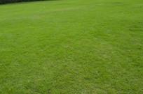草坪图片素材