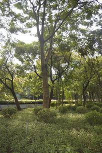 路边的树木绿植