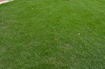 平整的草地