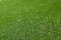平整的草坪