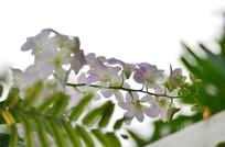 一枝兰花草