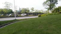 公园草坪树木风景