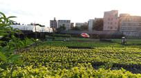 农田田园风景图片