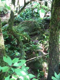 长着苔藓的树干