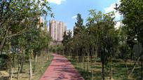 城市园林景观建设成果